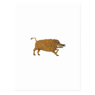Wild Boar Razorback Bone In Mouth Walking Retro Postcard