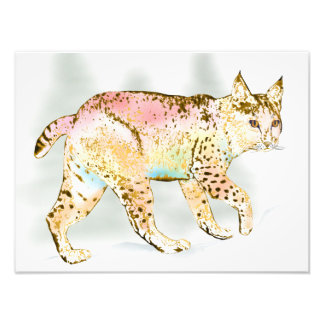Wild Bobcat in Color Photographic Print