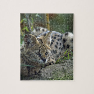 Wild Bobcat Jigsaw Puzzle