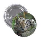 Wild Bobcat Pinback Button
