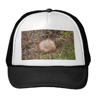 Wild Brown Mushroom Trucker Hats
