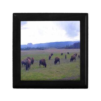 Wild Buffaloes Gift Box
