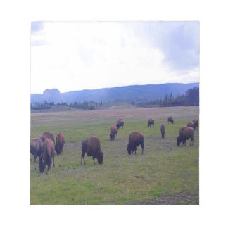 Wild Buffaloes Notepads