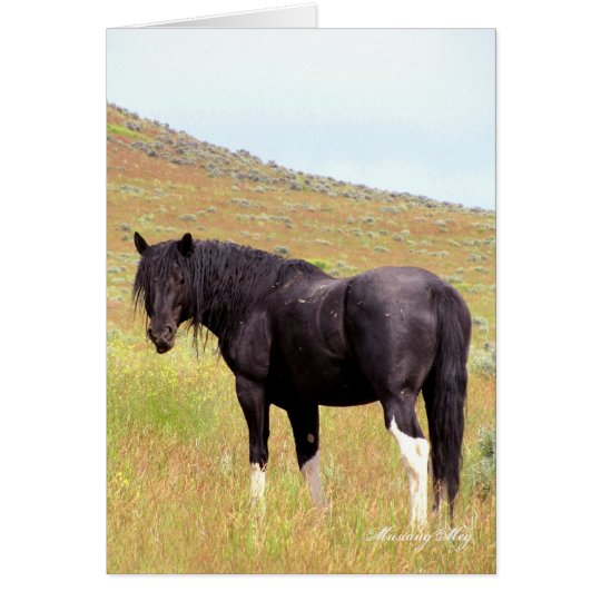 Wild Card~ Band Stallion of Steens Card