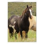 Wild Card~ Majesty, Band Stallion on Steens