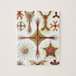 Wild Chamomile by Ernst Haeckel, Vintage Nature Puzzle