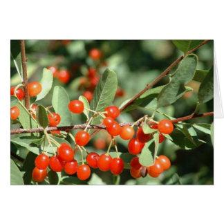Wild cherries 1 card