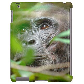 Wild Chimpanzee (Pan Troglodytes) Looking