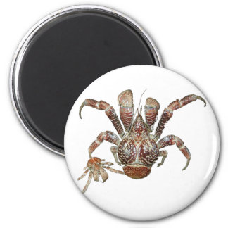 Wild Coconut Crab from Carribean 6 Cm Round Magnet