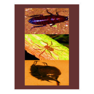 Wild Costarica - Spiders, Cockroaches and Insects Postcard