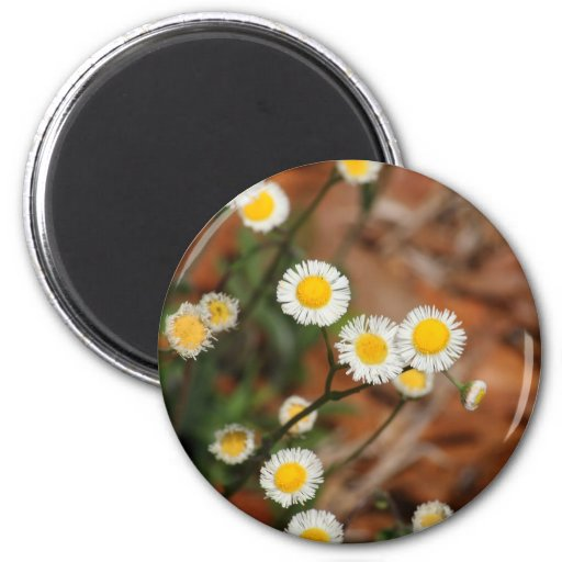 Wild Daisies Magnet