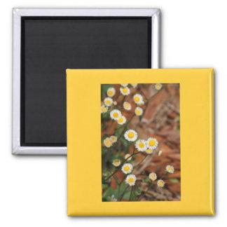 Wild Daisies Square Magnet