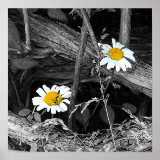 Wild Daisy Poster