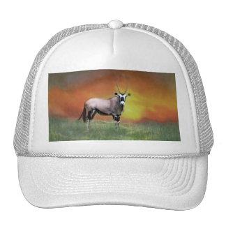 Wild deer at sunset hat