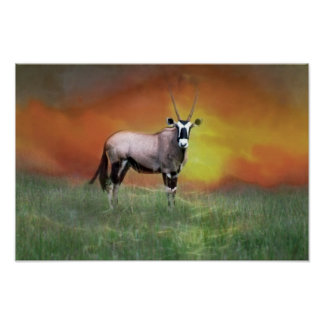 Wild deer at sunset poster