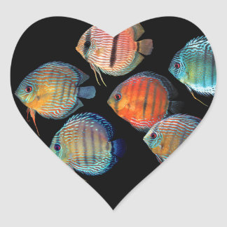 Wild Discus Heart Sticker