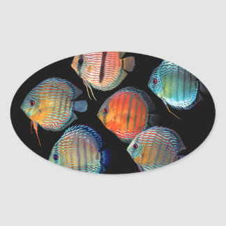 Wild Discus Oval Sticker