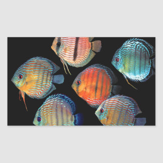 Wild Discus Rectangular Sticker