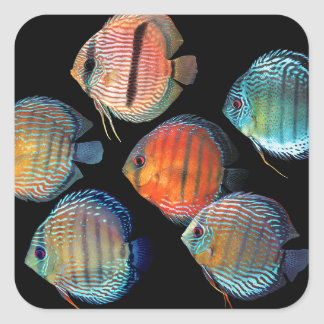 Wild Discus Square Sticker