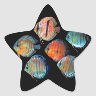 Wild Discus Star Sticker