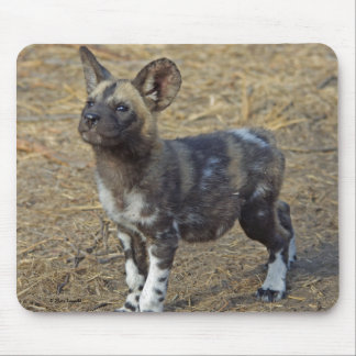 Wild Dog Puppy Mouse Pad