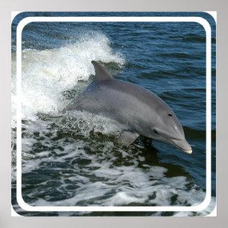 Wild Dolphin Poster Print