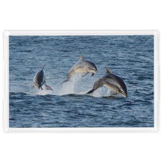 Wild Dolphins Leaping Photograph Scotland Highland Acrylic Tray