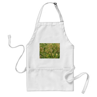 Wild dry plants in the meadow grass closeup standard apron