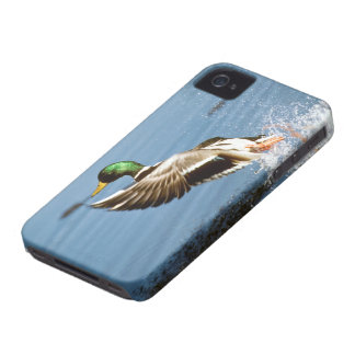 Wild Duck - BlackBerry Bold Cover
