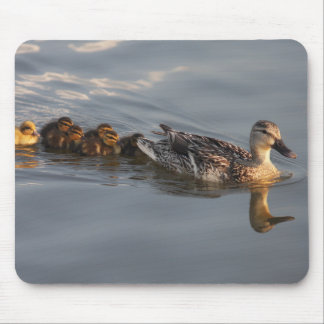 Wild duck family mouse pad