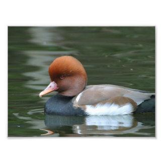 Wild duck photo art