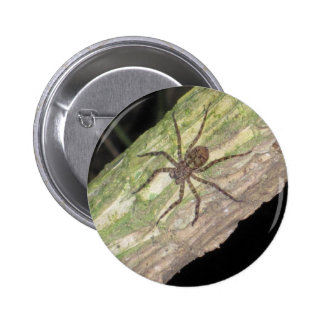Wild Exotic Spiders, Beetles  and Insects 6 Cm Round Badge