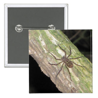 Wild Exotic Spiders, Beetles  and Insects 15 Cm Square Badge