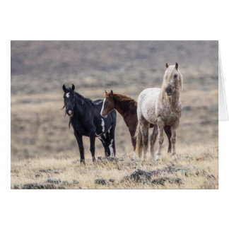Wild Family: Galloping to Freedom Greeting Card