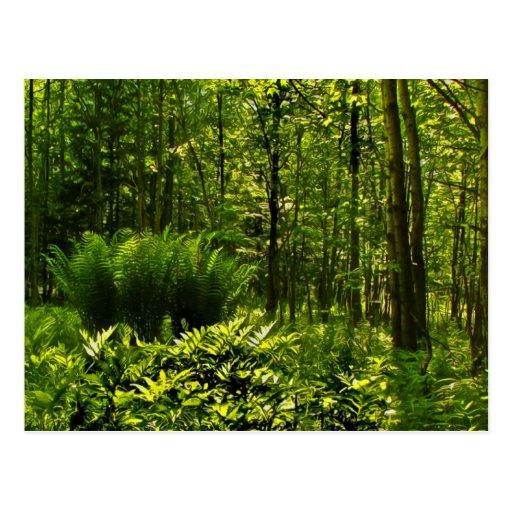Wild Ferns Post Card