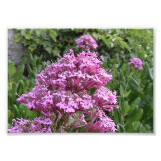 Wild Flower Collection #2 Photo