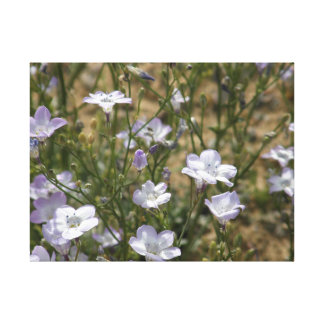 Wild Flowers in the Mojave Desert! Canvas Print