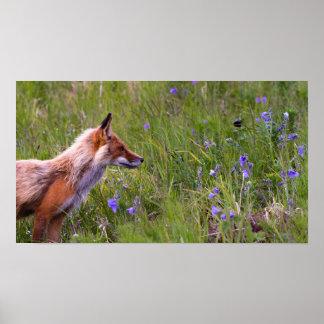 Wild Fox Poster