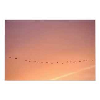 Wild game geese photo print