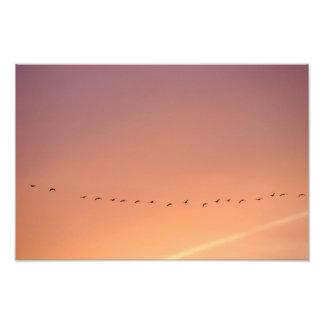 Wild game geese photo print