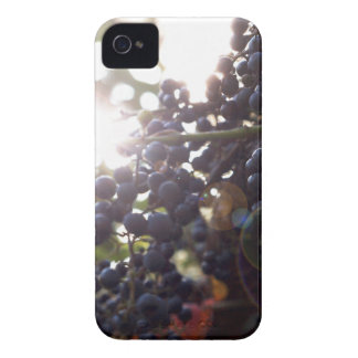 Wild Grapes iPhone 4 Case
