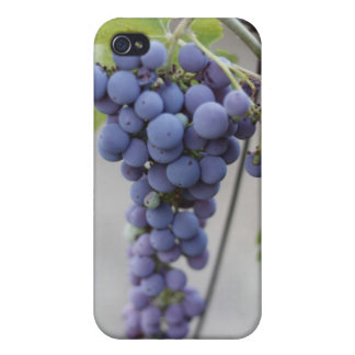 Wild Grapes iPhone cover iPhone 4 Cover