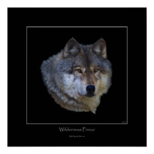 Wild Gray Wolf Art Poster