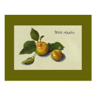 Wild Green Apples: Still Life in Color Pencil Postcard