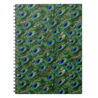 wild green peacock feathers notebooks