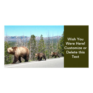 Wild Grizzly Bear Mama and Cubs in Yellowstone Picture Card