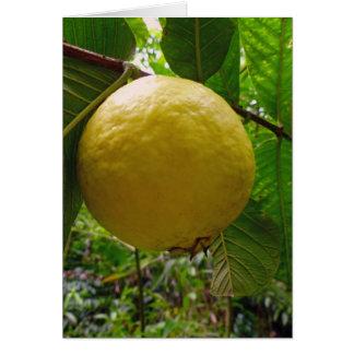 Wild Guava Card