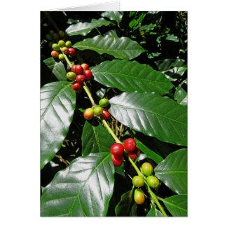 Wild Hawaiian Coffee Card