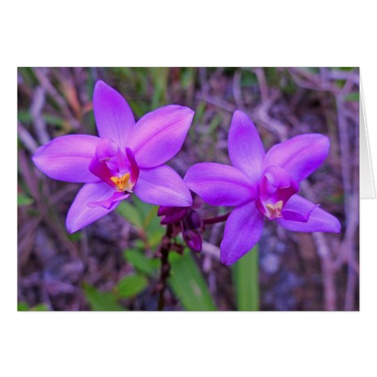 Wild Hawaiian Orchids Card