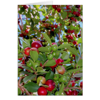 Wild Hawaiian Strawberry Guavas Card